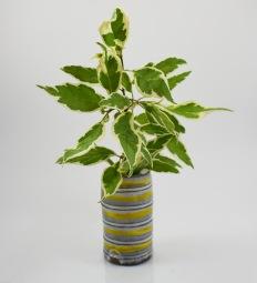 yellow line cylender vase